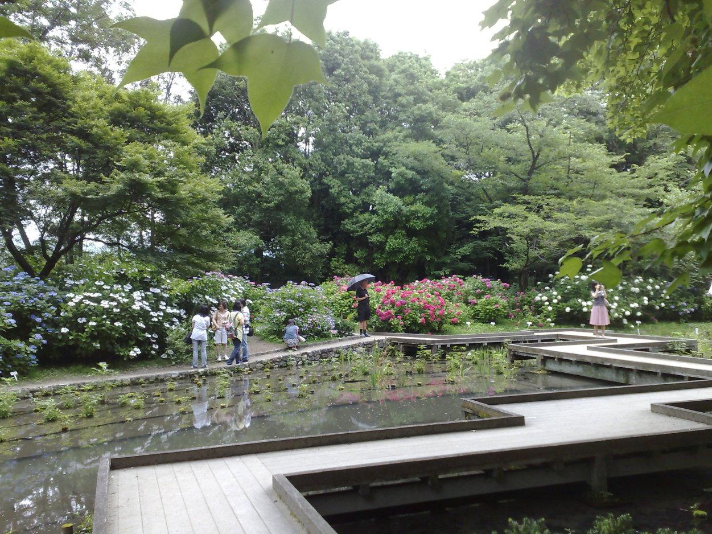 Ginko arkiv   luna eks trädgårdsblogg