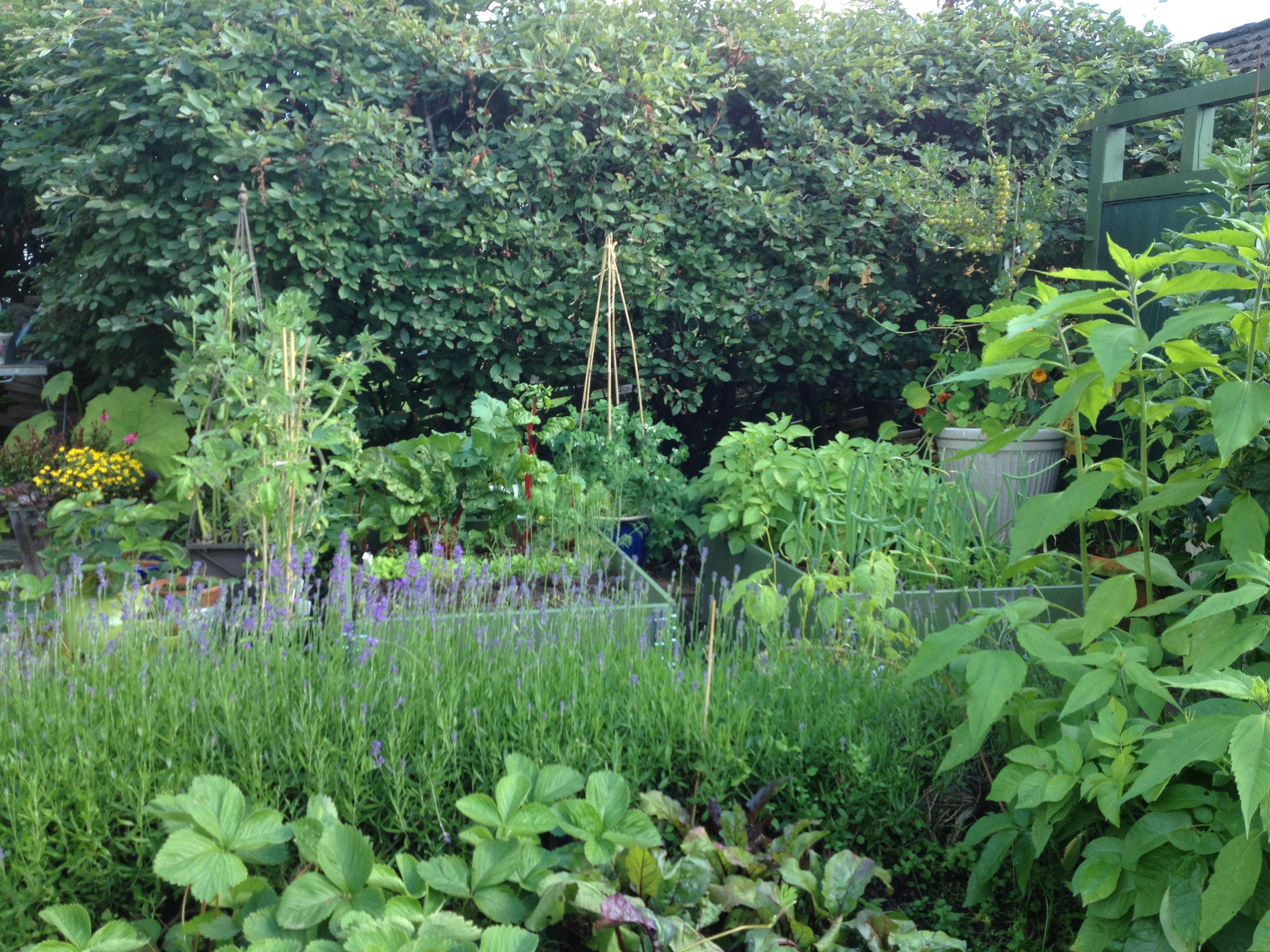 Luna eks trädgårdsblogg   sida 54 av 67   trädgård ...