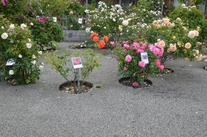 Österlen – Sveriges trädgÃ¥rd - Luna Eks trädgÃ¥rdsblogg : trädgård sverige : Trädgård