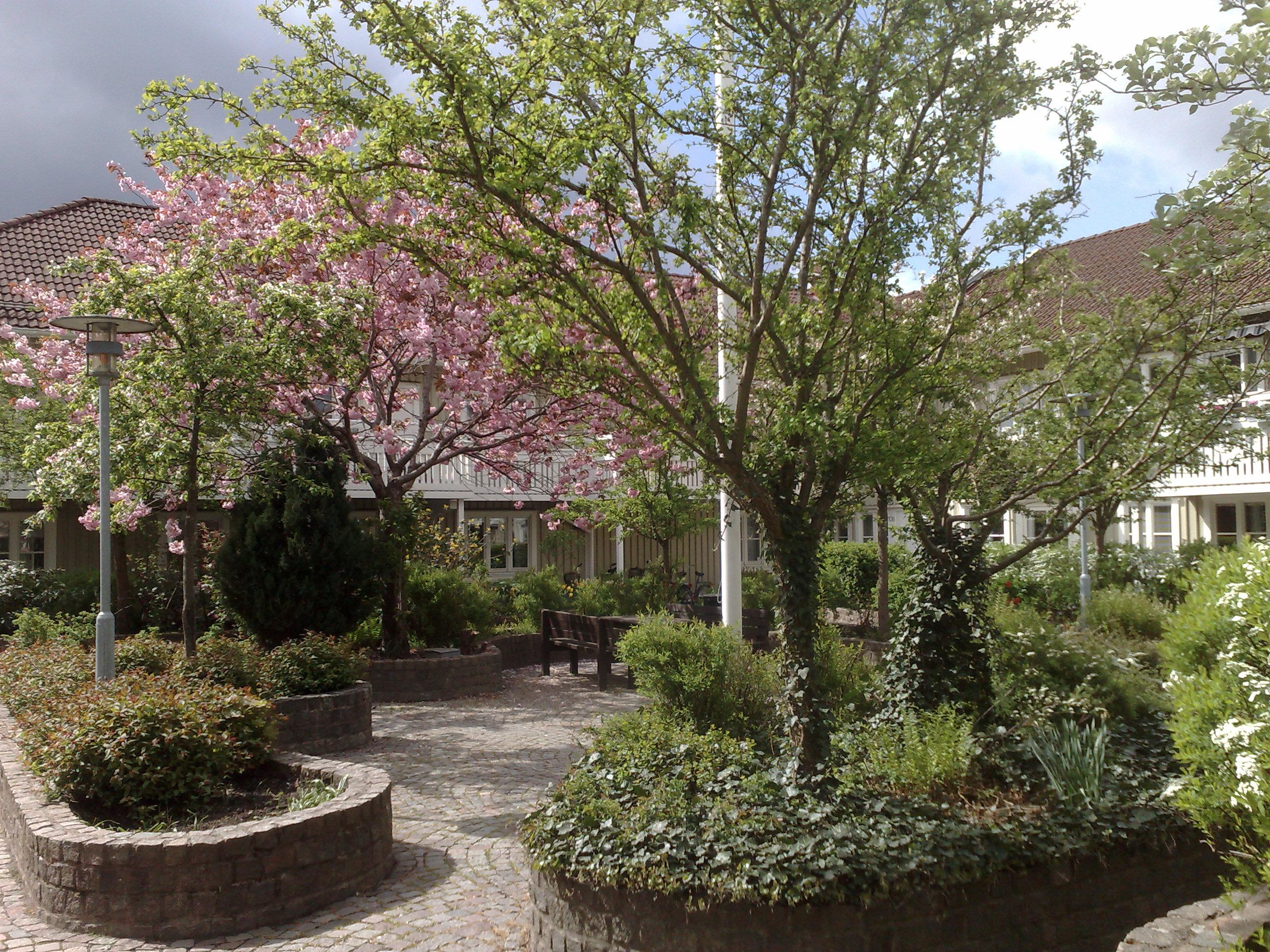 Radhustomt arkiv   luna eks trädgårdsblogg