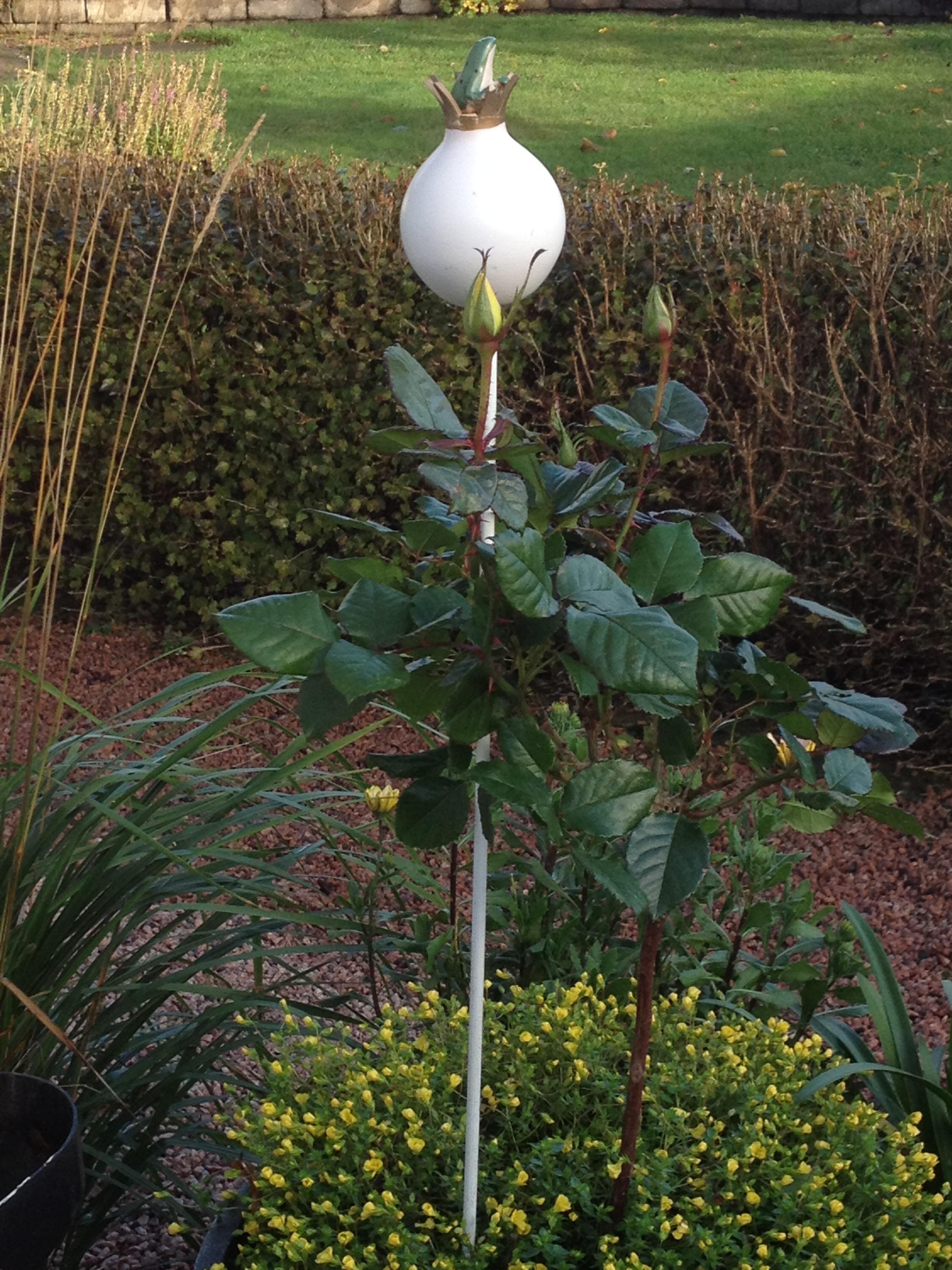 Luna Eks trädgårdsblogg - Sida 51 av 67 - trädgård ...
