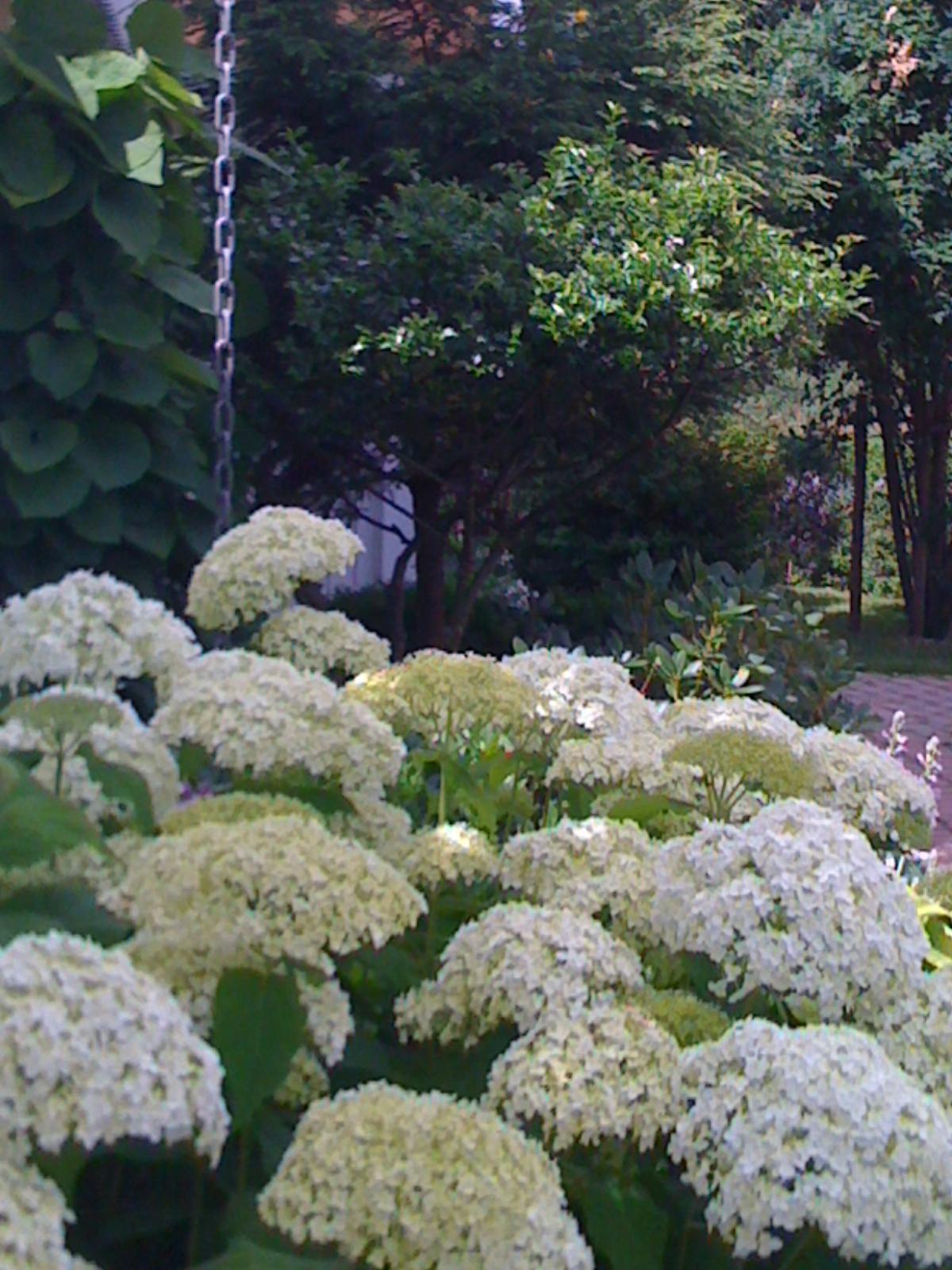 Luna eks trädgårdsblogg   sida 47 av 67   trädgård ...