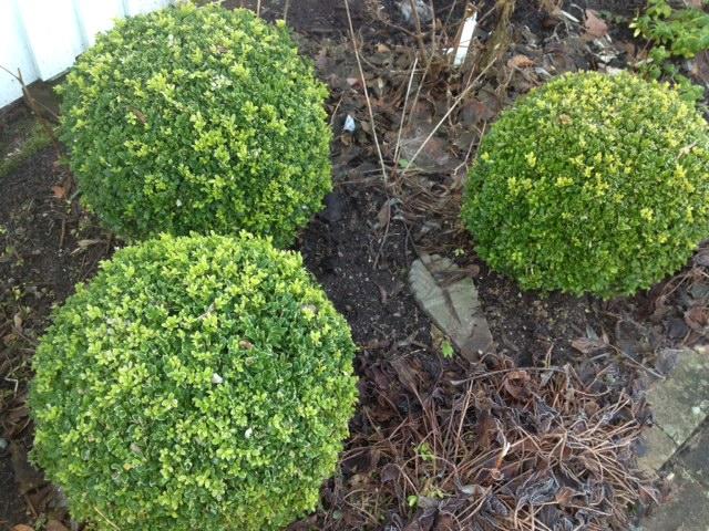fina buskar i trädgården