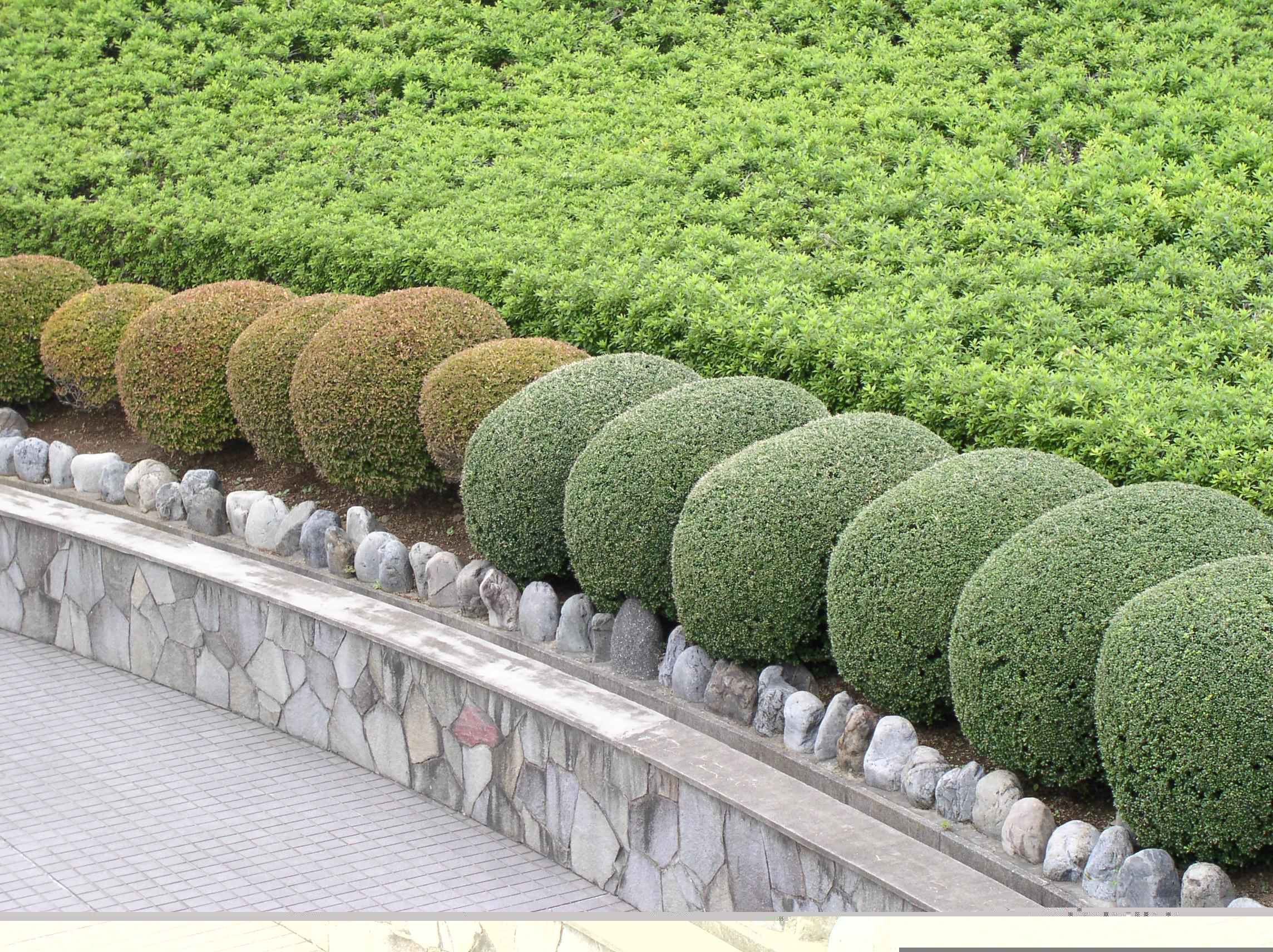 Kina arkiv   luna eks trädgårdsblogg