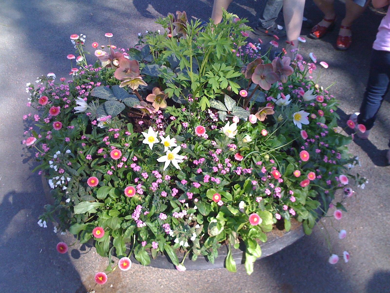 botaniska_4_110424