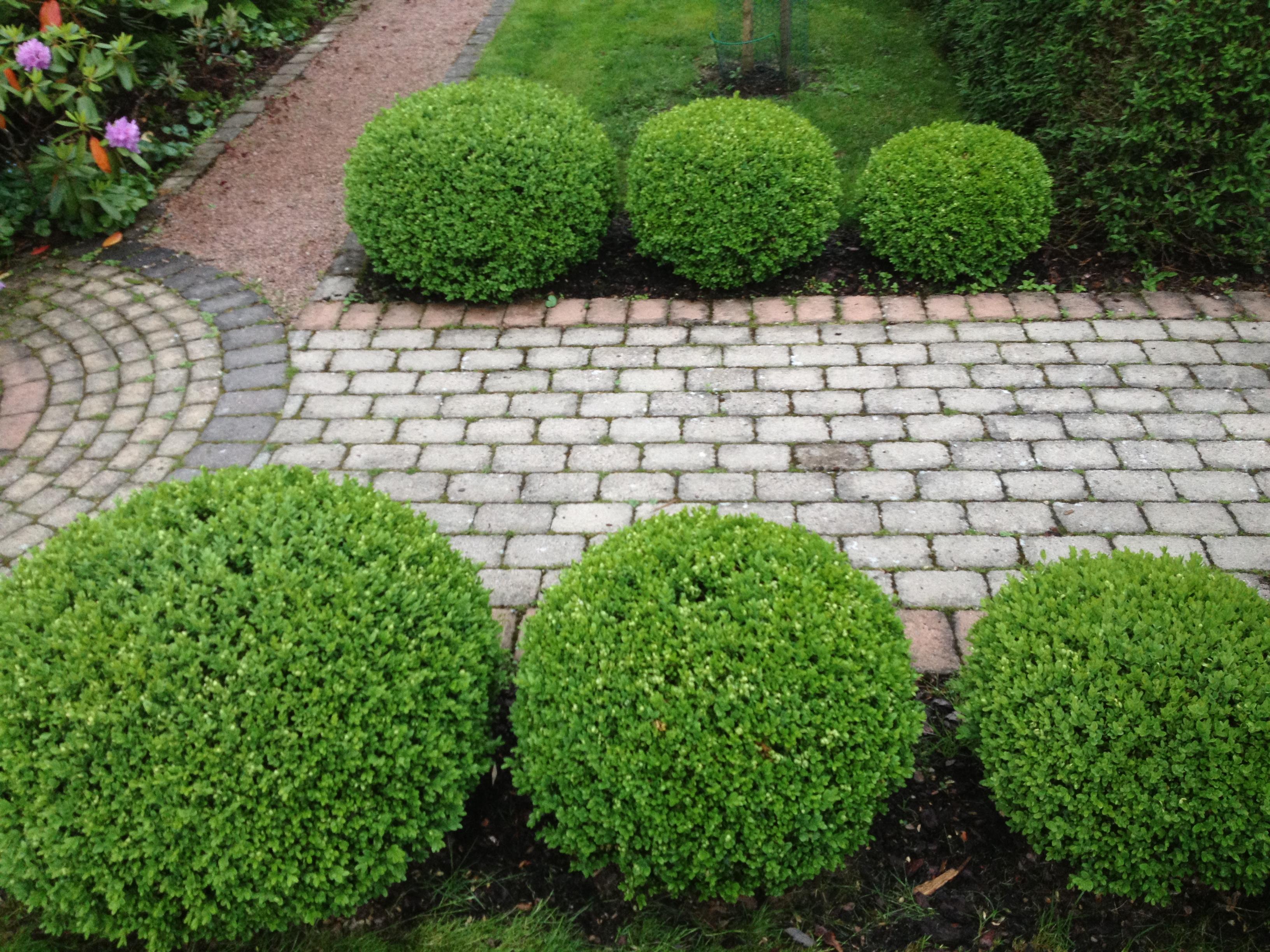 gröna buskar trädgård