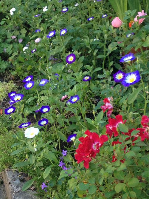 blommanfordagen