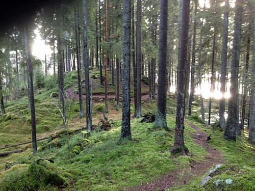 skogstig