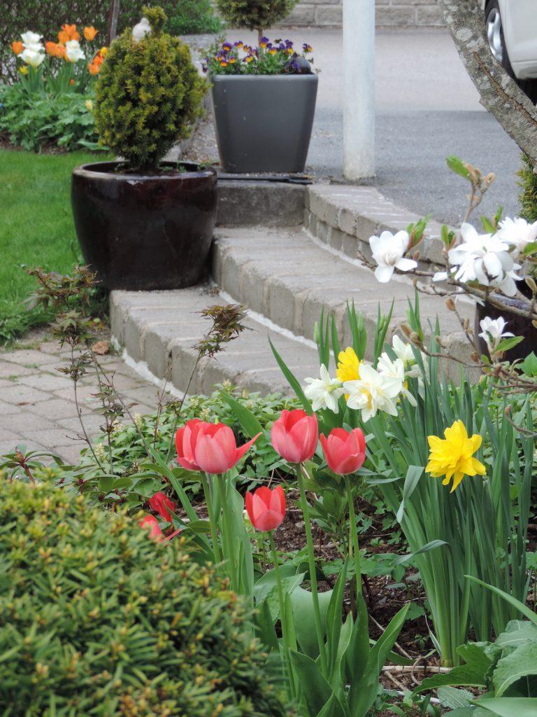 Pioner arkiv   luna eks trädgårdsblogg