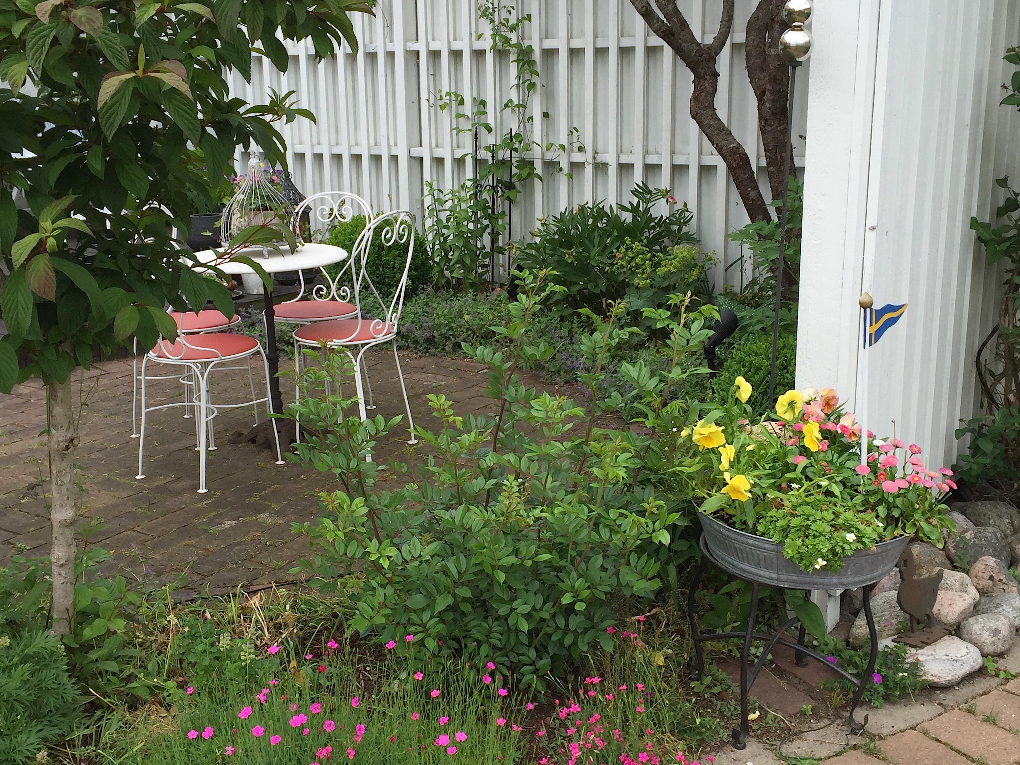 Tre månader sedan höftledsbytet   luna eks trädgårdsblogg