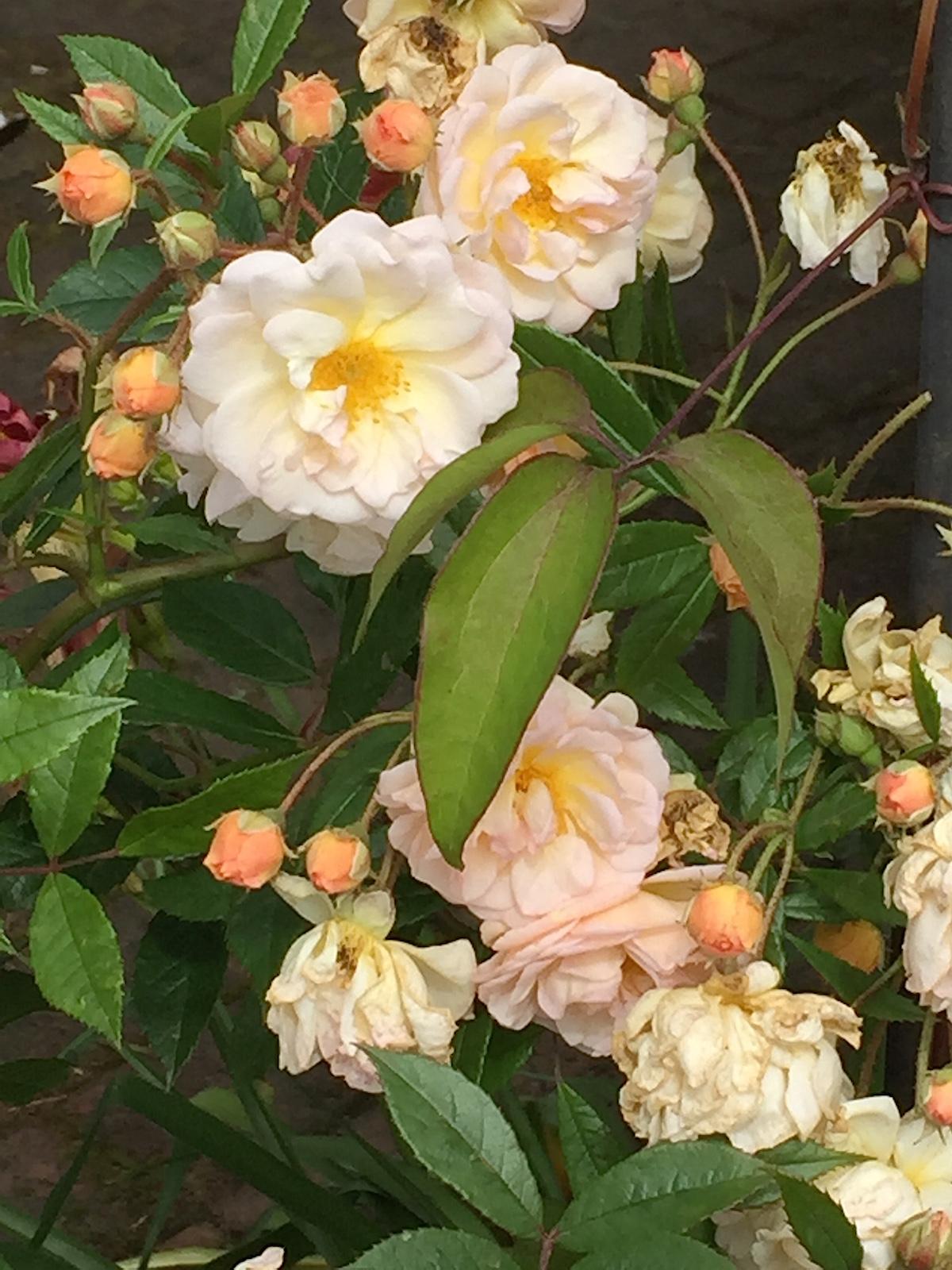 Renovering och trädgård   luna eks trädgårdsblogg