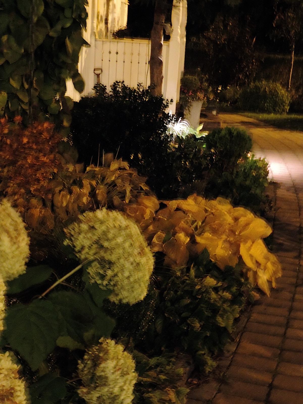Fullmåne och flitig dag ute   luna eks trädgårdsblogg