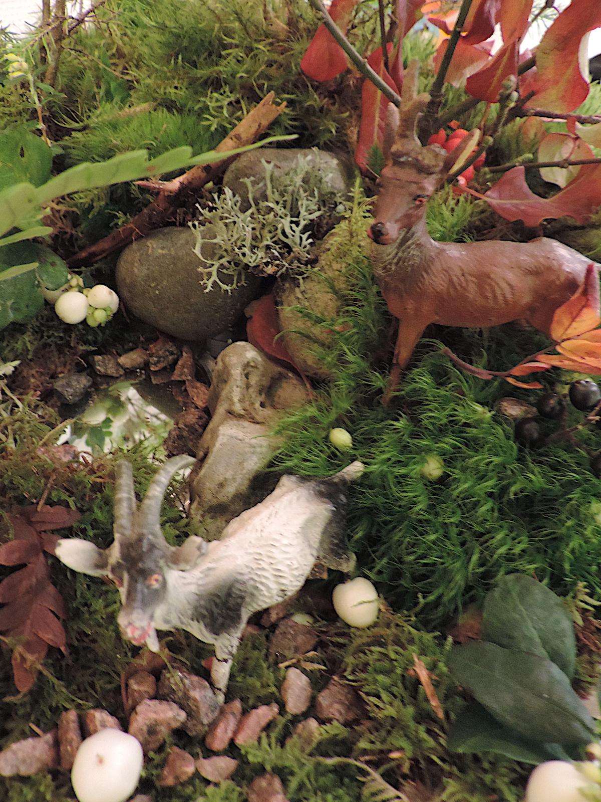 Adventstid och vad döljer sig här   luna eks trädgårdsblogg